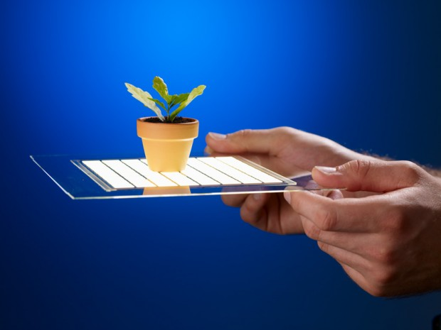 OLED with plant
