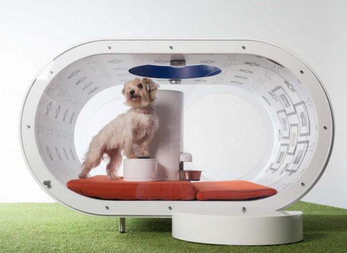 samsung_dream_doghouse